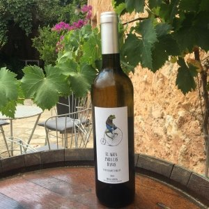 fantastic mallorcan white wine